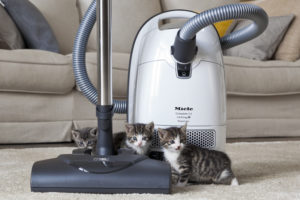 Miele Compact C2 Cat and Dog Review (Canada), C3 Comparison