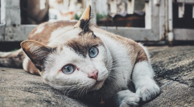 Cat Urine Stains with Carpet